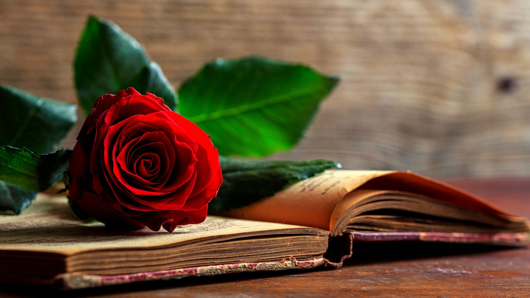 Valentine's Day Verses For Cards – How Valentine's Day and Covid Are Still A Romantic Match